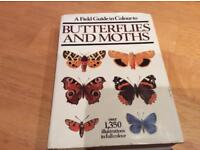 Butterflies and Moths. Illustrated