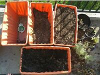 Bulk lot of plants, pots and soil. Mint, parsley. Hanging planter the lot £5
