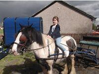 5yr old Piebald Mare Horse