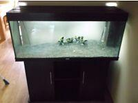 Juwel Rio 240 Aquarium Tank, Stand, T5 Lighting, Internal Filter and Heater