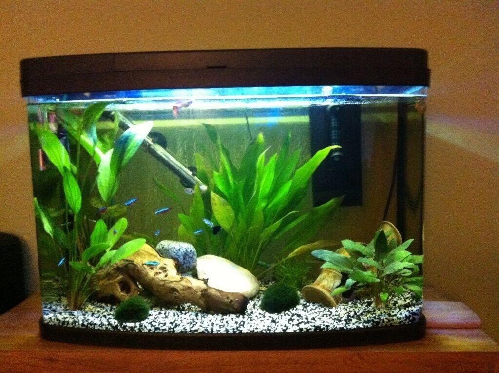 love fish aquarium 1000 aquarium ideas. Black Bedroom Furniture Sets. Home Design Ideas