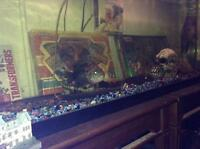 50 gallon fish tank plus fish