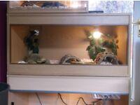 snake for sale complete with viv