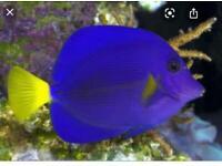 Marine fish, corals and anenomes discounted