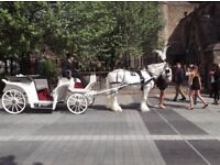 A Horse and Carriage for your Special Day - Weddings, Proms and all Special Occasions