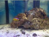 Marine fish tank contents SOLD!!!!!