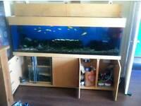 6.7FT FISHTANK WITH CABINET WITH SUMP & AQUA MEDIC 6500 RETURN PUMP (BARGAIN)