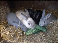 5 beautful bunnys