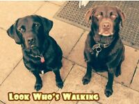 Dog Walking Service & Part Time Dog Walker Required LU2 Area