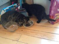 2 FREE KITTENS LOOKING FOR A GOOD HOME!!!