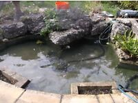 Pond Cleaning, Maintenance and Construction - [Surrey and London area]