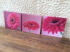 3 Lovely Pink flower pictures