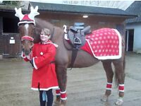 Horse and rider xmas outfit