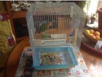 Birds whit cage for sa