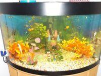 juwel corner fish tank