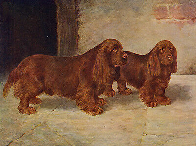 SUSSEX SPANIEL CHARMING DOG GREETINGS NOTE CARD TWO BEAUTIFUL DOGS