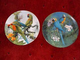 12 Bone china Wedgwood plates of macaws