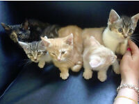 7 Beautiful Kittens For Sale To Good Homes