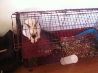 White Dwarf Bunny with Delux Cage and Lots of Accessorie