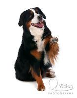 REWARD BASED, POSITIVE DOG TRAINING