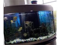 Front bow fish tank