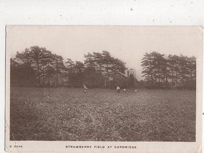 Strawberry Field At Curdridge Hampshire 1913 RP Postcard 645b