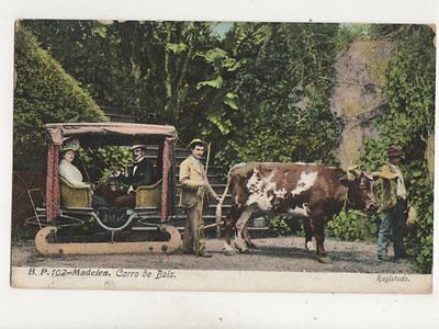 Madeira Carro De Bois 1908 Postcard 361b