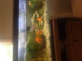 160 litre Aquarium for sale