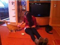 Cat sitter - friendly, reliable, flexible