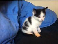 Kittens for loving home
