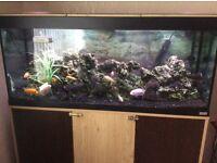 Fish tank 4ft fluval