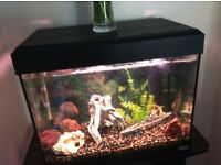 "Bargain''""2ft fish tank"