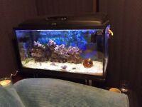 Tropical Marine Aquarium c/w pump, filter, fish, etc