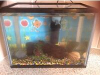 Fish Tank 31cm wide, 18cm deep and 23.5cm high