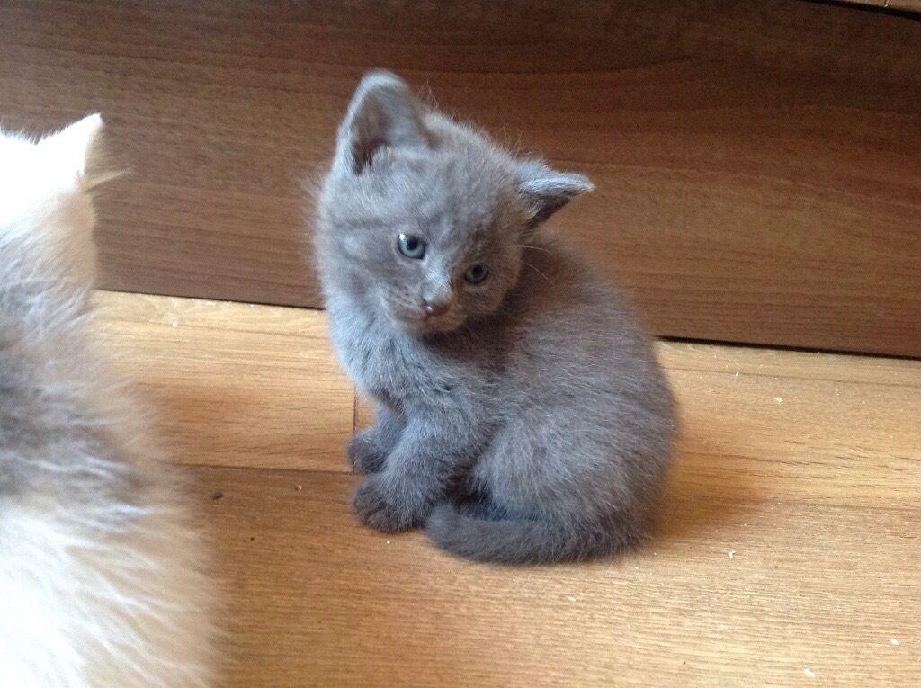 grey kitten wallpaper 294 - photo #37
