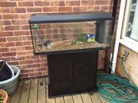 Large juwel fish tank