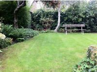 Gerald's gardening clearance: Shrub, tree (big ones, too) and hedge pruning, cutting back and tidy