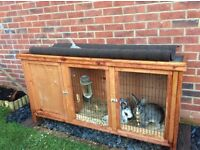 Two female rabbits with 5ft Hutch