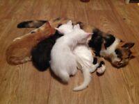 Four wonderful kittens ready for loving homes