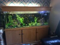 Fishes with Aquariam