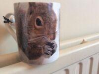 Squirrel items