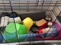 RAT CAGE - PLUS LOTS OF EXTRAS! great price for quick sale