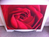 Beautiful large rose canvas painting 80cm wide x60cm long