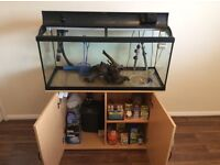 160 litre fish tank, stand, and all accessories