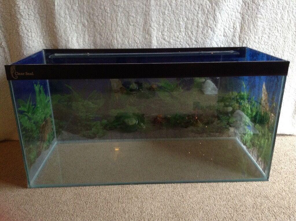 Clear seal fish aquarium including ornaments big filter for Warm water fish