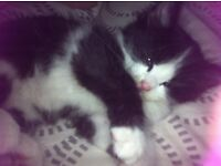 Kittens ready to be rehomed