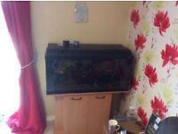 3ft 175l fish tank