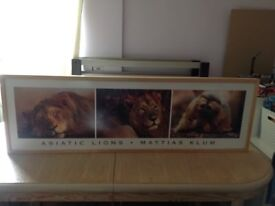 Ikea lion picture
