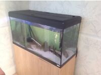 Tropical Fish Aquarium XXXX. For Sale. XXXX
