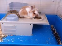 Female rabbit 14 months old eats well drinks well with cage with birth certificate